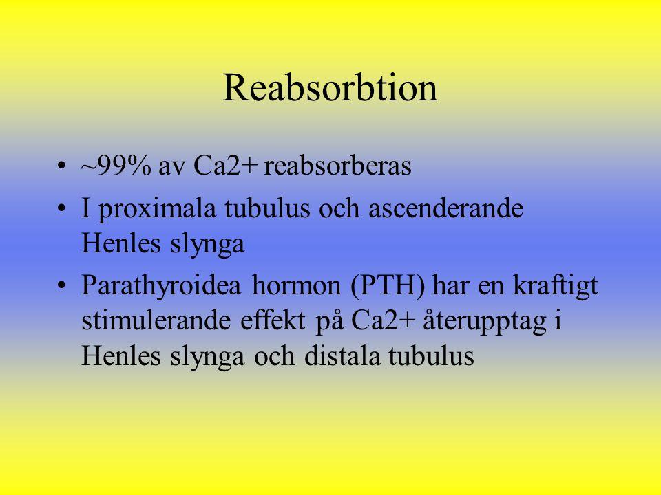 ~99% av Ca2+ reabsorberas I proximala tubulus och ascenderande Henles slynga Parathyroidea hormon (PTH) har en kraftigt stimulerande effekt på Ca2+ åt