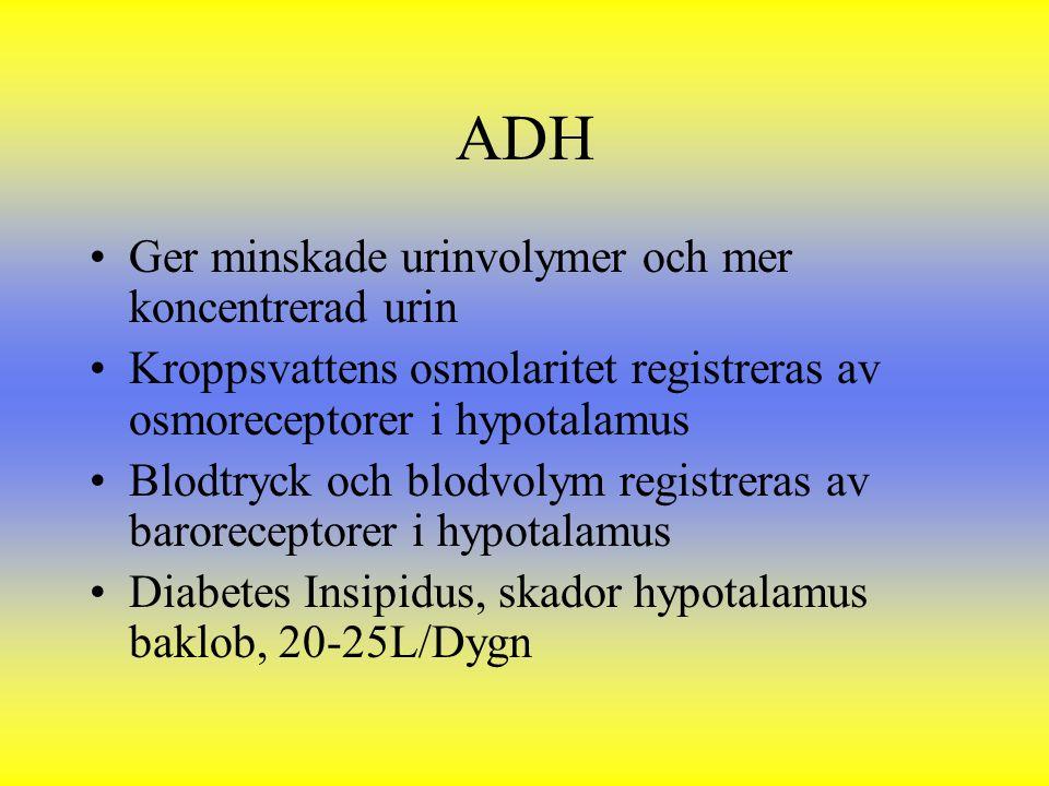 ADH Ger minskade urinvolymer och mer koncentrerad urin Kroppsvattens osmolaritet registreras av osmoreceptorer i hypotalamus Blodtryck och blodvolym r