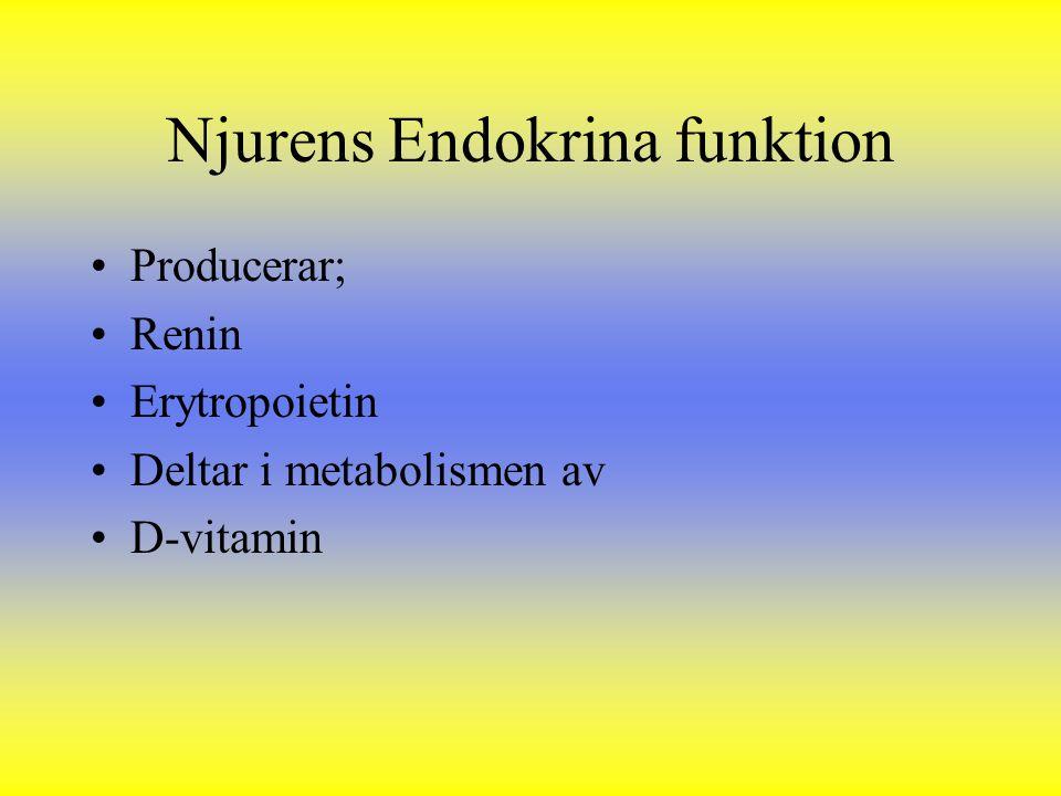 Njurens Endokrina funktion Producerar; Renin Erytropoietin Deltar i metabolismen av D-vitamin