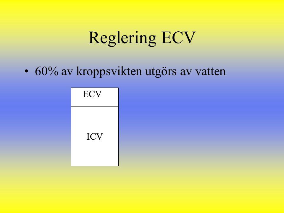 Reglering ECV 60% av kroppsvikten utgörs av vatten ICV ECV