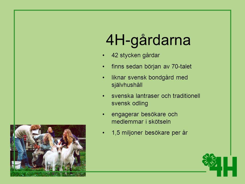 4H-gårdarna 42 stycken gårdar finns sedan början av 70-talet liknar svensk bondgård med självhushåll svenska lantraser och traditionell svensk odling engagerar besökare och medlemmar i skötseln 1,5 miljoner besökare per år