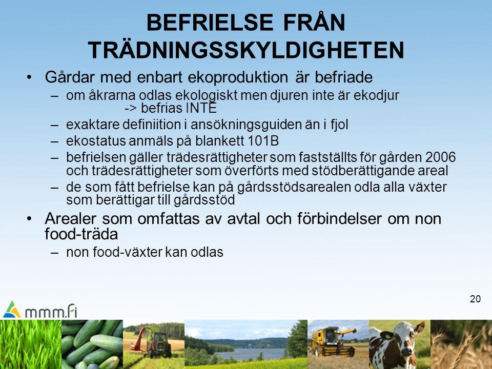 20 BEFRIELSE FRÅN TRÄDNINGSSKYLDIGHETEN Gårdar med enbart ekoproduktion är befriade –om åkrarna odlas ekologiskt men djuren inte är ekodjur -> befrias INTE –exaktare definiition i ansökningsguiden än i fjol –ekostatus anmäls på blankett 101B –befrielsen gäller trädesrättigheter som fastställts för gården 2006 och trädesrättigheter som överförts med stödberättigande areal –de som fått befrielse kan på gårdsstödsarealen odla alla växter som berättigar till gårdsstöd Arealer som omfattas av avtal och förbindelser om non food-träda –non food-växter kan odlas