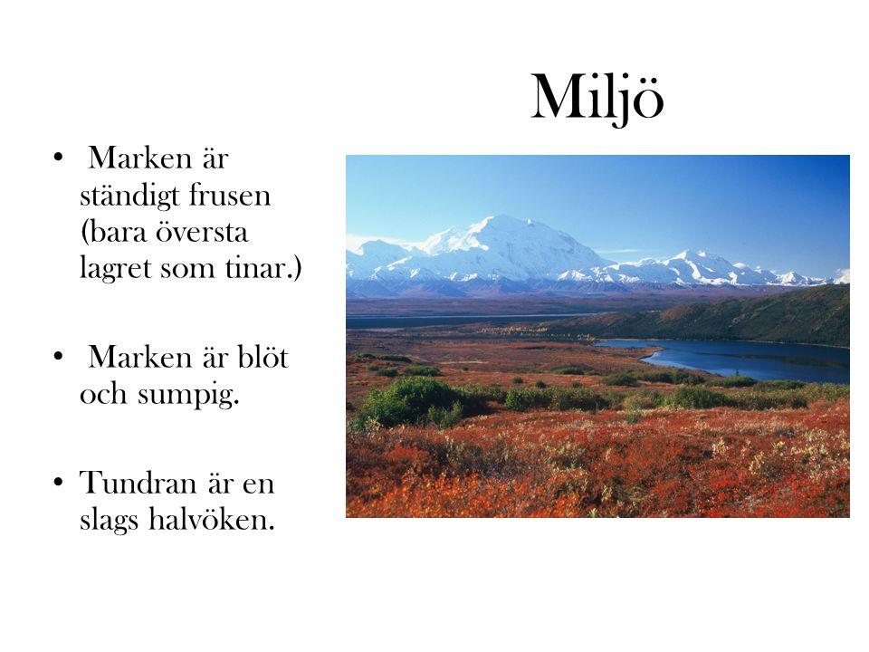 Inuiterna Utbreder sig i bl.a.Nunavut, Canada Jagar, fiskar, tältar och lever campingliv.
