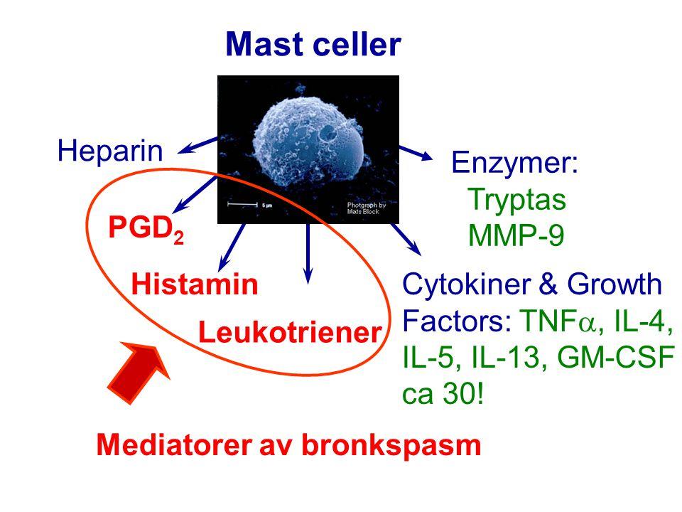 Allergen provokation  explorera astmans patofysiologi  undersöka behandlingseffekter En in vivo, human modell: Genom att mäta: Lungfunktion - tidig reaktion - senreaktion Inflammation - tex eosinofiler Hyperreaktivitet