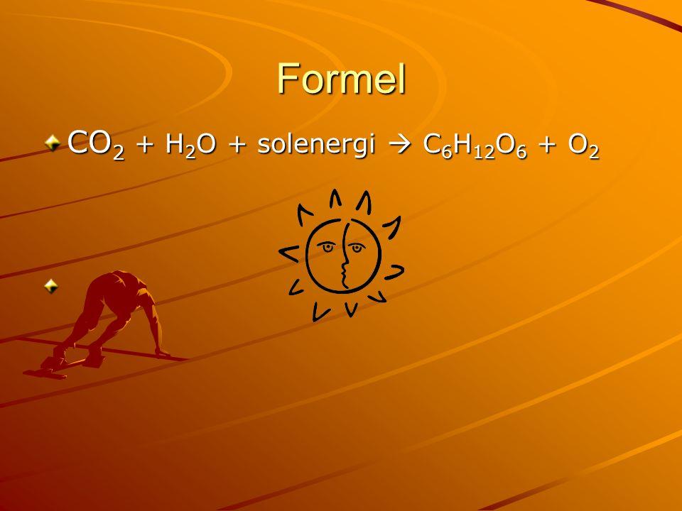 Formel CO 2 + H 2 O + solenergi  C 6 H 12 O 6 + O 2