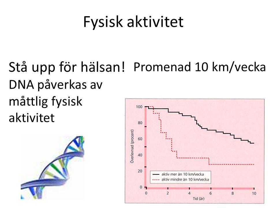 Fysisk aktivitet Stå upp för hälsan! DNA påverkas av måttlig fysisk aktivitet Promenad 10 km/vecka