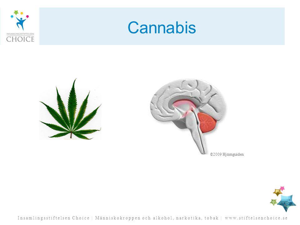Insamlingsstiftelsen Choice | Människokroppen och alkohol, narkotika, tobak | www.stiftelsenchoice.se Cannabis ©2009 Hjärnguiden