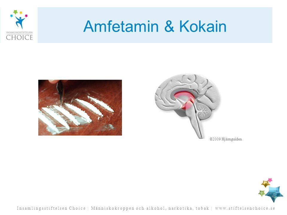 Insamlingsstiftelsen Choice | Människokroppen och alkohol, narkotika, tobak | www.stiftelsenchoice.se Amfetamin & Kokain ©2009 Hjärnguiden