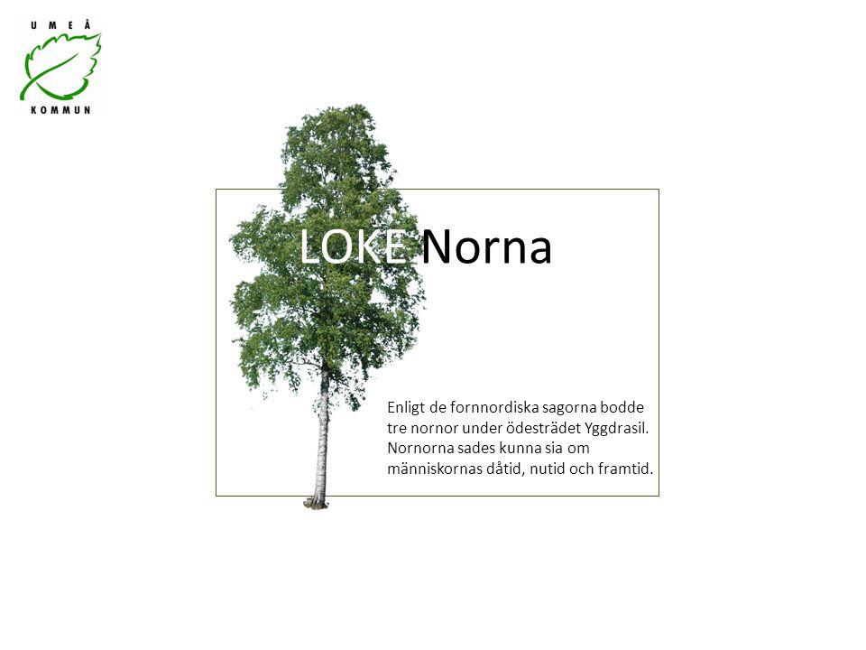 Enligt de fornnordiska sagorna bodde tre nornor under ödesträdet Yggdrasil.