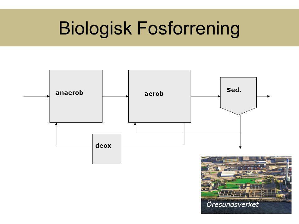 Biologisk Fosforrening Öresundsverket aerob Sed. anaerob deox