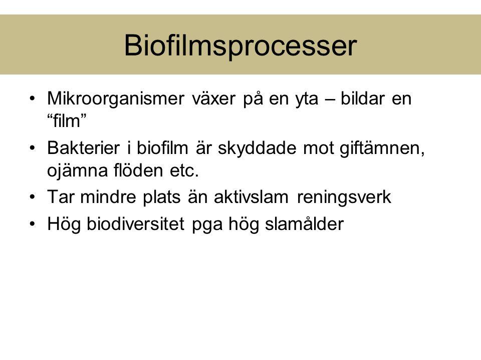 """Biofilmsprocesser Mikroorganismer växer på en yta – bildar en """"film"""" Bakterier i biofilm är skyddade mot giftämnen, ojämna flöden etc. Tar mindre plat"""