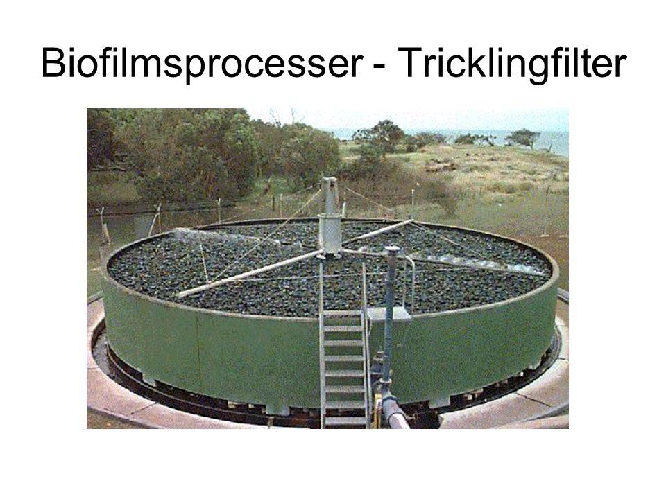 Biofilmsprocesser - Tricklingfilter