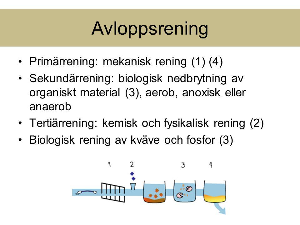 Avloppsrening Primärrening: mekanisk rening (1) (4) Sekundärrening: biologisk nedbrytning av organiskt material (3), aerob, anoxisk eller anaerob Tert