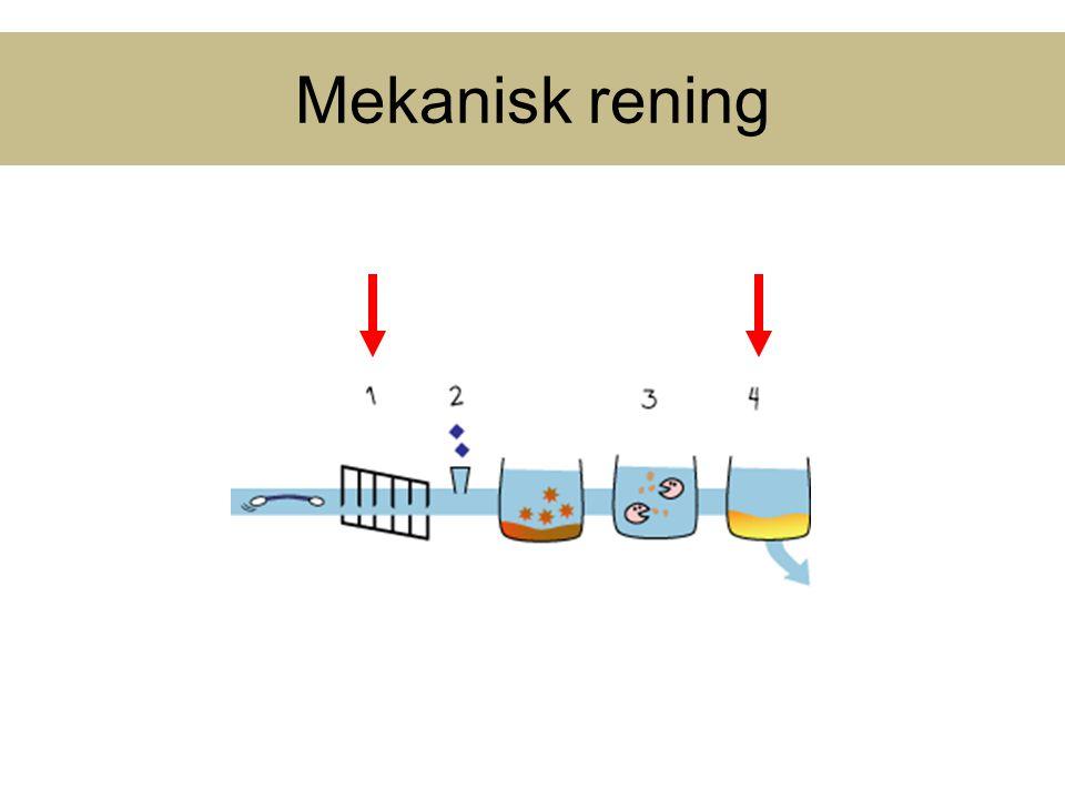 Biologisk Kväverening Nitrifikation: autotrofa, aeroba, långsamväxande, små (0.2-1.0μm) AOB : Amonium oxiderande bakterier (Nitrosomonas) NH 4 + + O 2  NO 2 - NOB : Nitrit oxiderande bakterier (Nitrobacter) NO 2 - + O 2  NO 3 - Denitrifikation: heterotrofa, aeroba men kan andas NO 2 /NO 3 under anoxiska förhållanden.