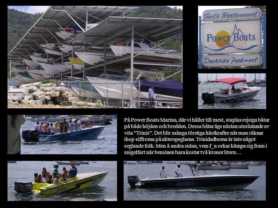 På Power Boats Marina, där vi håller till mest, staplas rejsiga båtar på både höjden och bredden.
