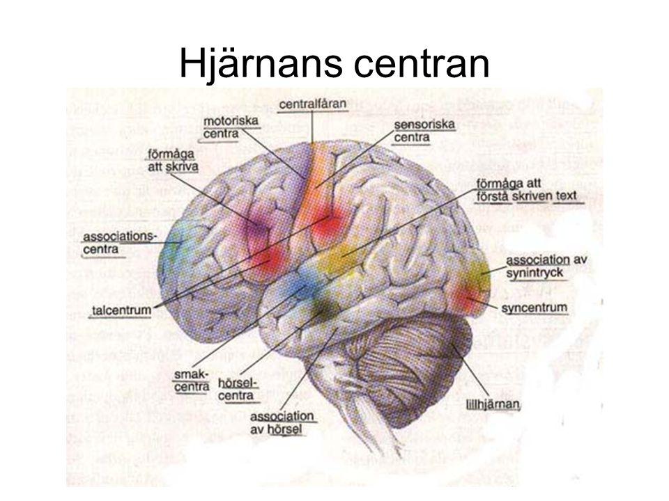 Hjärnans centran ?