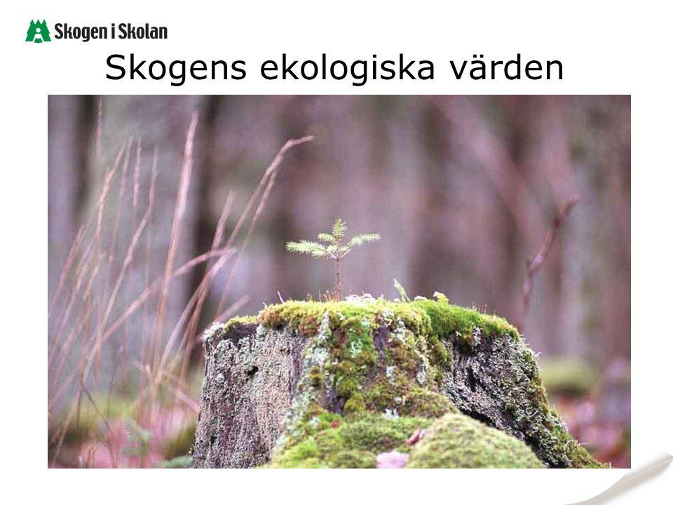 Skogens ekologiska värden