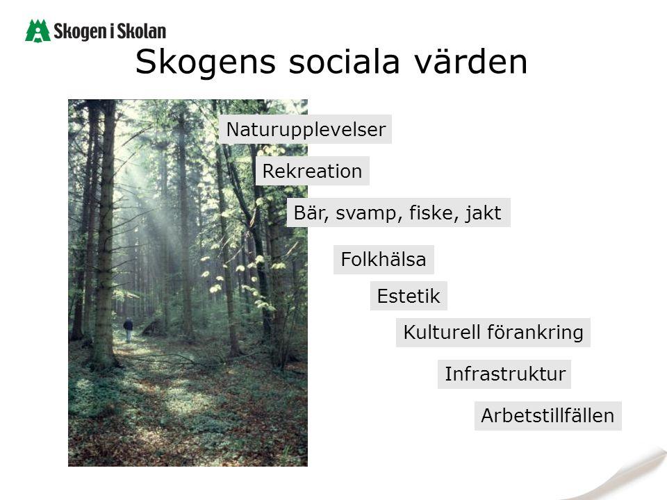Skogens sociala värden Naturupplevelser Kulturell förankring Rekreation Estetik Folkhälsa Bär, svamp, fiske, jakt Arbetstillfällen Infrastruktur