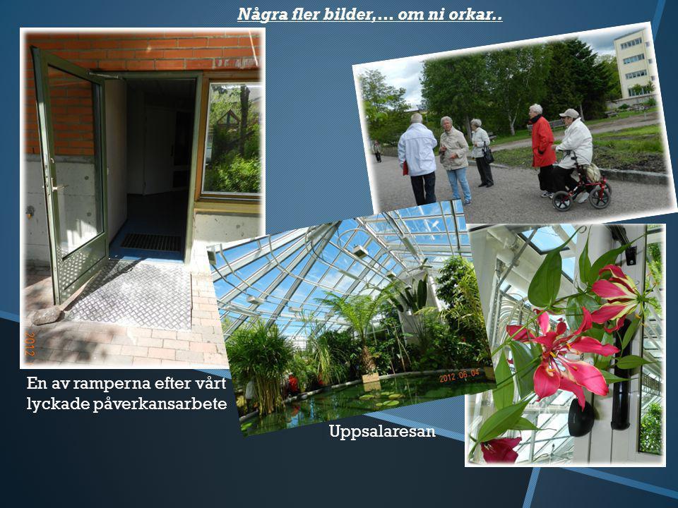Lite fler bilder..... Spontant Tårtkalas på vår uteplats... … med Gerds hembakade