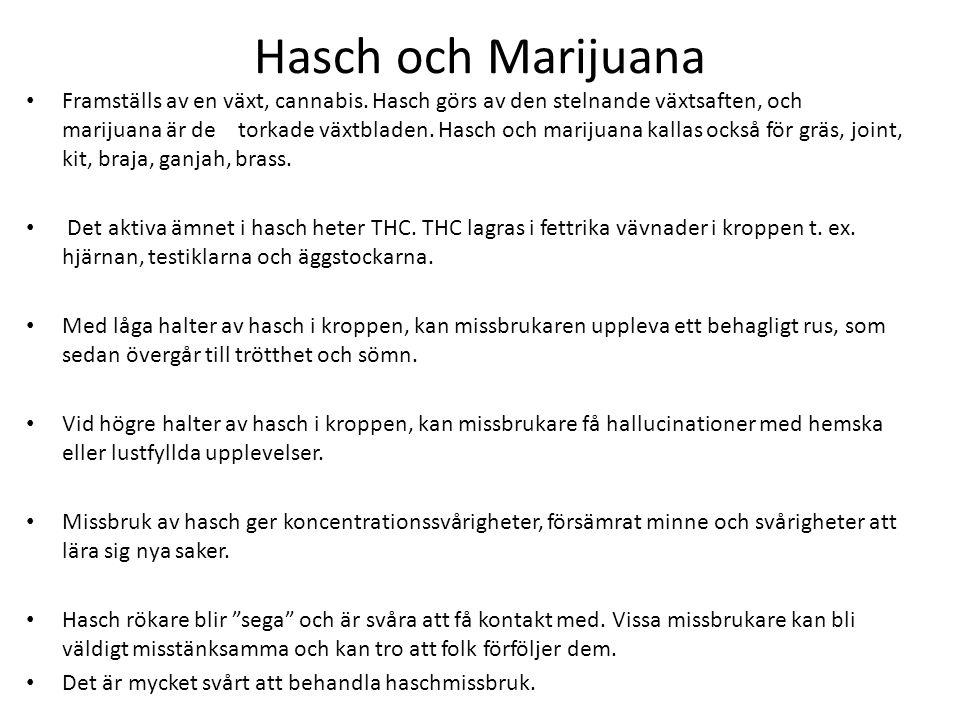 Hasch och Marijuana Framställs av en växt, cannabis. Hasch görs av den stelnande växtsaften, och marijuana är de torkade växtbladen. Hasch och marijua