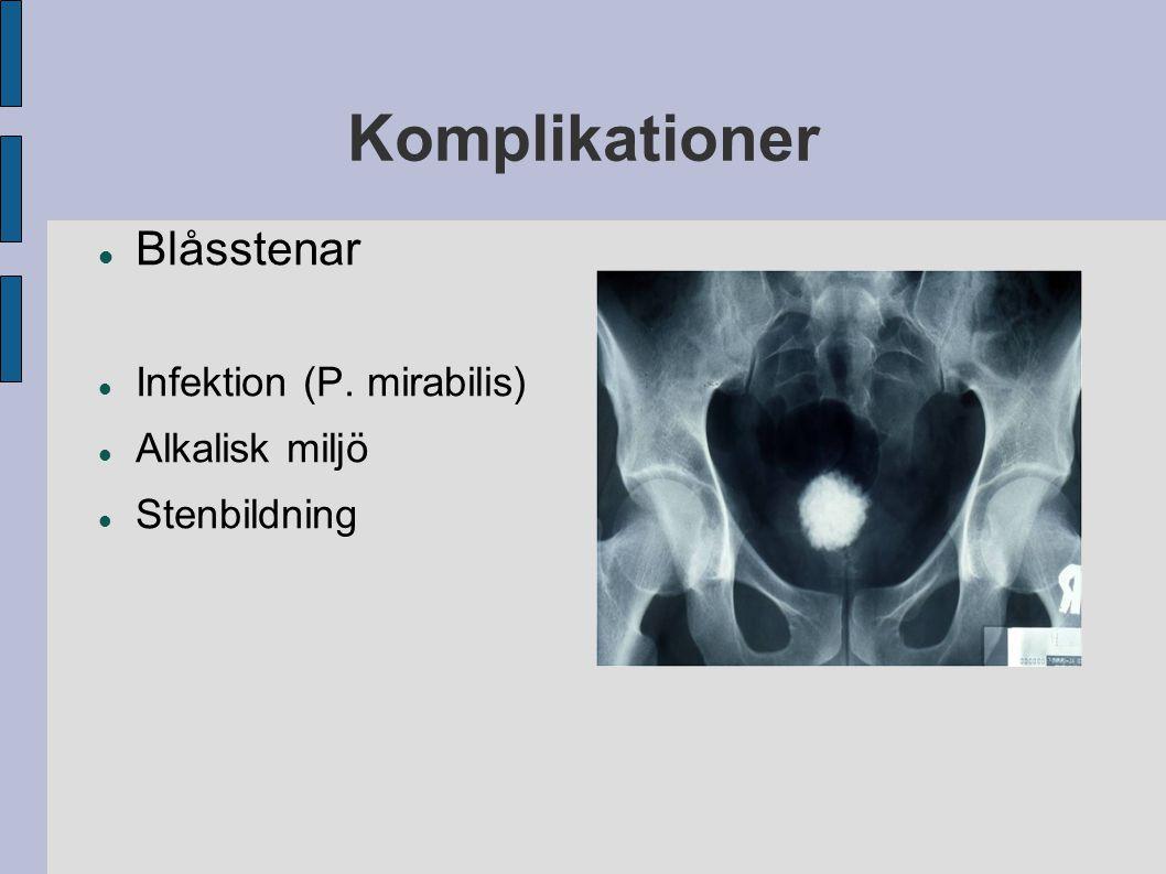 Komplikationer Blåsstenar Infektion (P. mirabilis) Alkalisk miljö Stenbildning