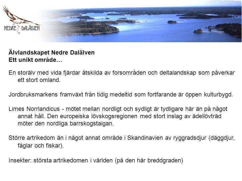 Älvlandskapet Nedre Dalälven Ett unikt område… En storälv med vida fjärdar åtskilda av forsområden och deltalandskap som påverkar ett stort omland. Jo