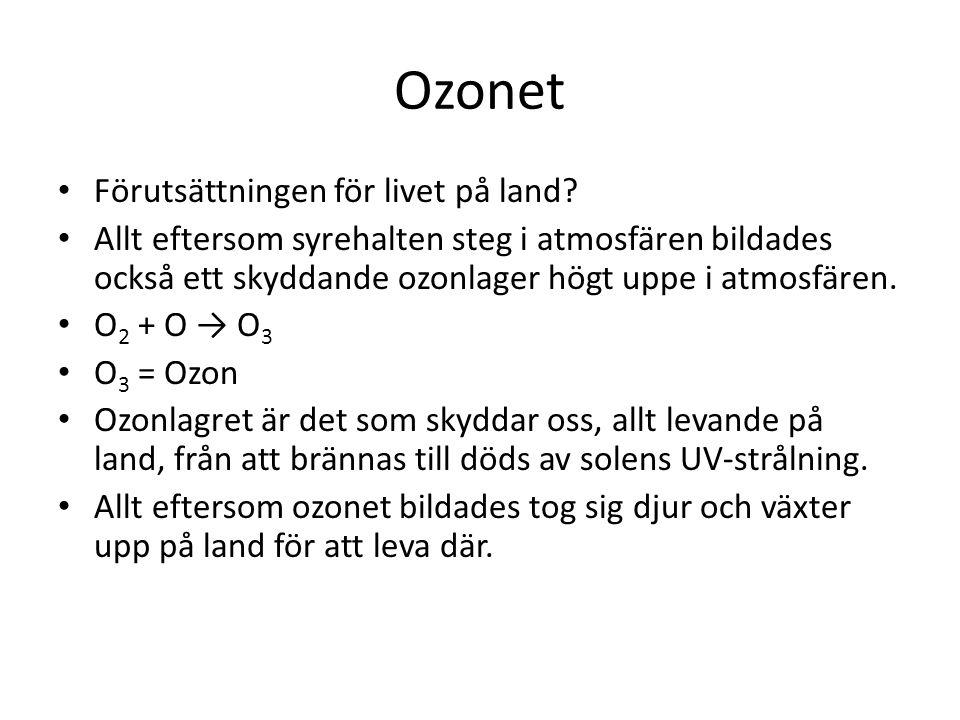 Ozonet Förutsättningen för livet på land.