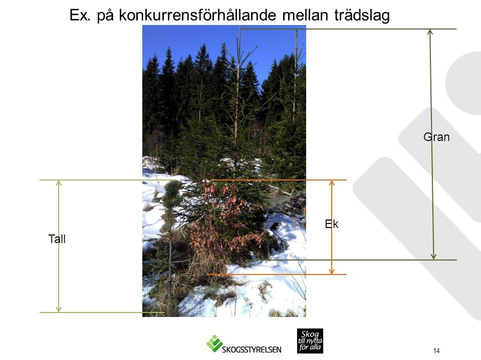 14 Ex. på konkurrensförhållande mellan trädslag Tall Ek Gran