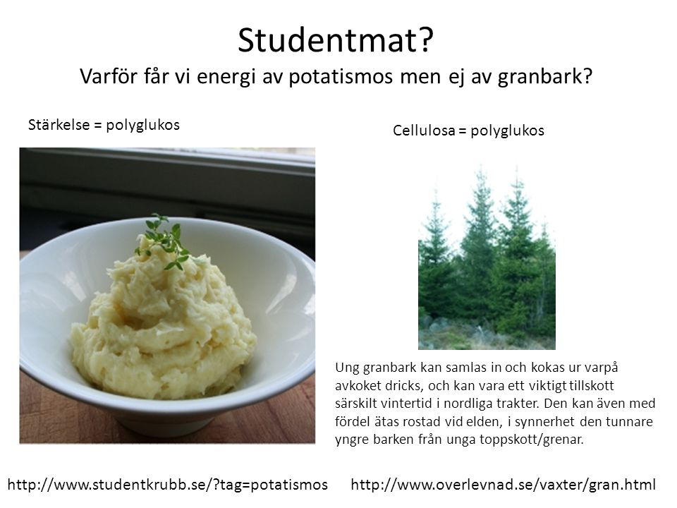 Studentmat? Varför får vi energi av potatismos men ej av granbark? http://www.overlevnad.se/vaxter/gran.html Ung granbark kan samlas in och kokas ur v