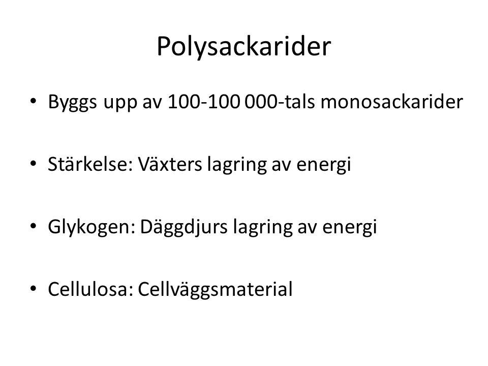 Polysackarider Byggs upp av 100-100 000-tals monosackarider Stärkelse: Växters lagring av energi Glykogen: Däggdjurs lagring av energi Cellulosa: Cellväggsmaterial