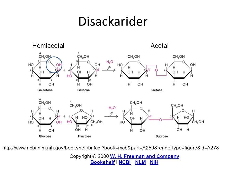 Disackarider http://www.ncbi.nlm.nih.gov/bookshelf/br.fcgi?book=mcb&part=A259&rendertype=figure&id=A278 Copyright © 2000 W. H. Freeman and CompanyW. H
