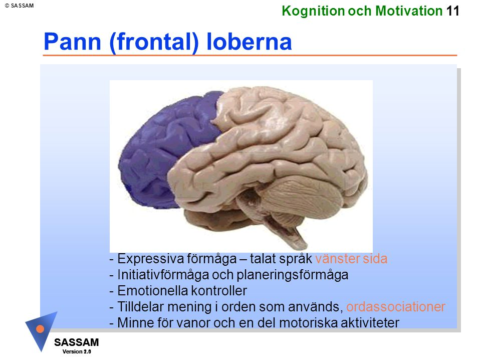 SASSAM Version 1.1 © SASSAM SASSAM Version 1.1 SASSAM Version 2.0 Kognition och Motivation 11 Pann (frontal) loberna - Expressiva förmåga – talat språ