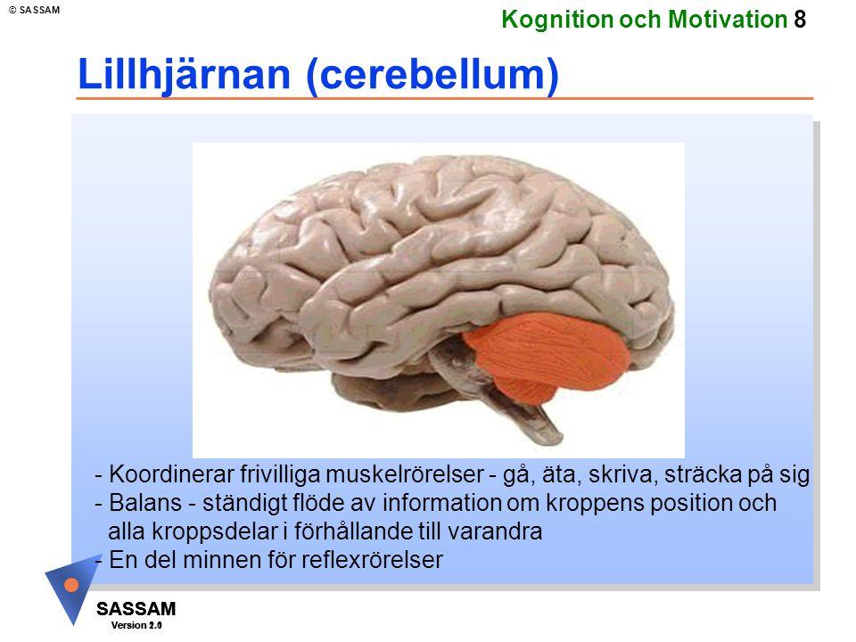 SASSAM Version 1.1 © SASSAM SASSAM Version 1.1 SASSAM Version 2.0 Kognition och Motivation 9 Tinning (temporal) lober - Hörsel - Visuell igenkännande - Sensorisk information i långtidsminnet - Affektiv betydelse vid inlärning