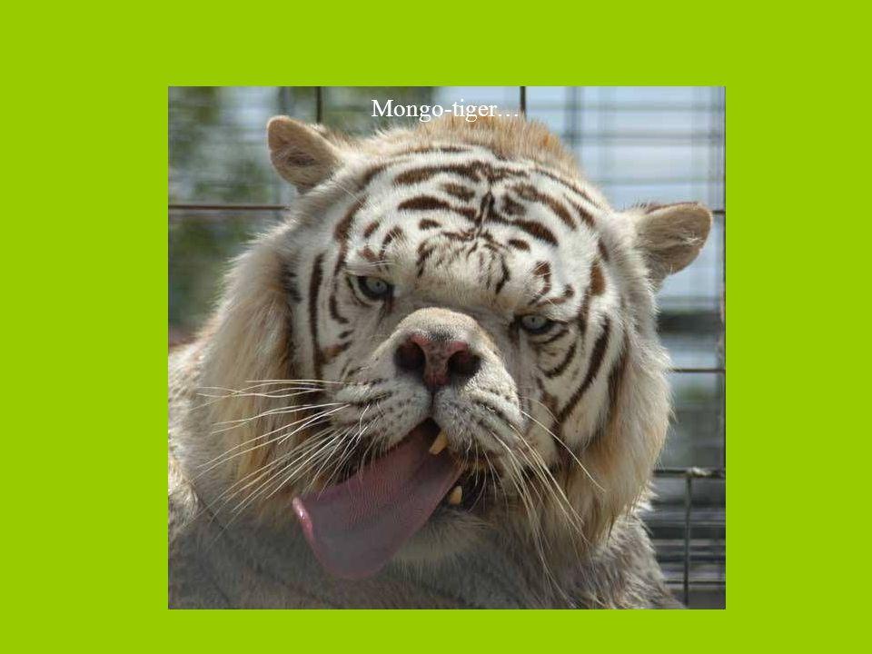 Mongo-tiger…