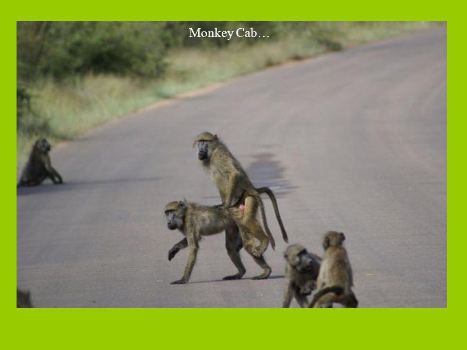 Monkey Cab…