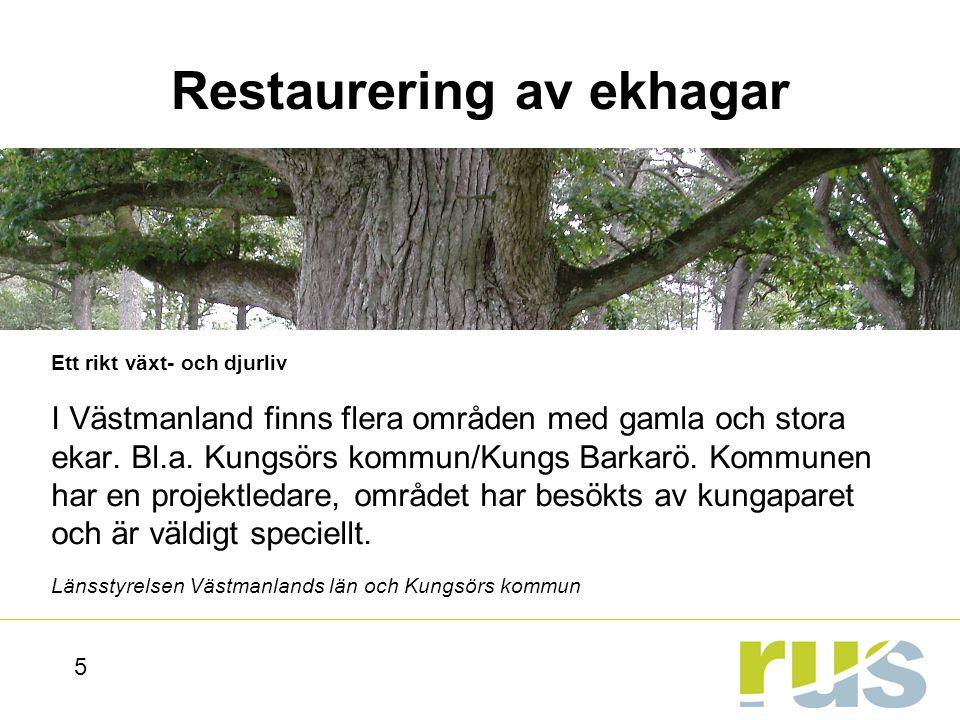 Gamlebyviken - vattenarbete Ingen övergödning, Myllrande våtmarker m.m.