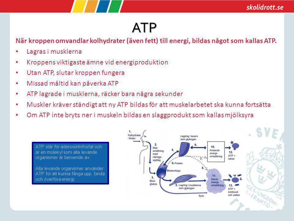 ATP När kroppen omvandlar kolhydrater (även fett) till energi, bildas något som kallas ATP. Lagras i musklerna Kroppens viktigaste ämne vid energiprod