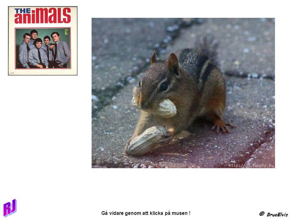 ® BrucElvis Gå vidare genom att klicka på musen .Några exempel på underhållande skyltning.