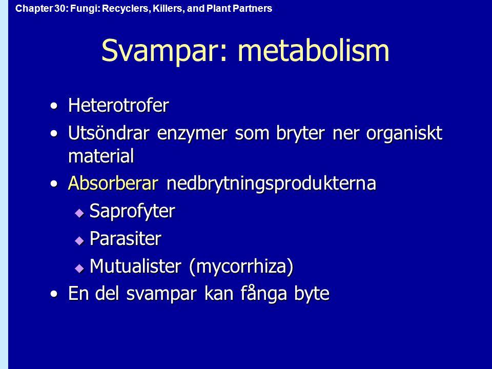 Svampar: metabolism HeterotroferHeterotrofer Utsöndrar enzymer som bryter ner organiskt materialUtsöndrar enzymer som bryter ner organiskt material Ab