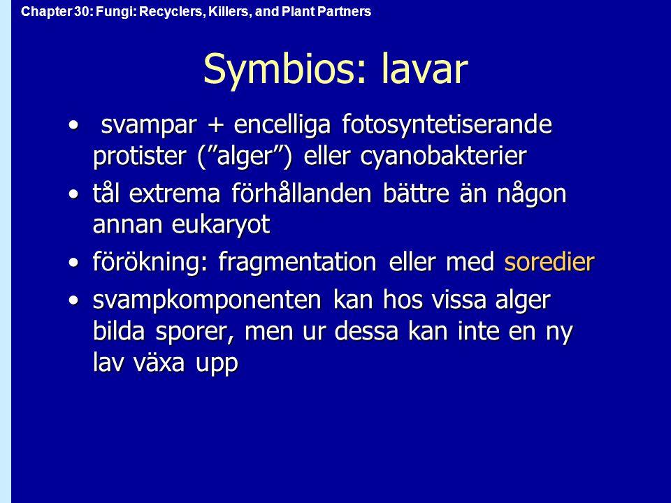 "Chapter 30: Fungi: Recyclers, Killers, and Plant Partners Symbios: lavar svampar + encelliga fotosyntetiserande protister (""alger"") eller cyanobakteri"