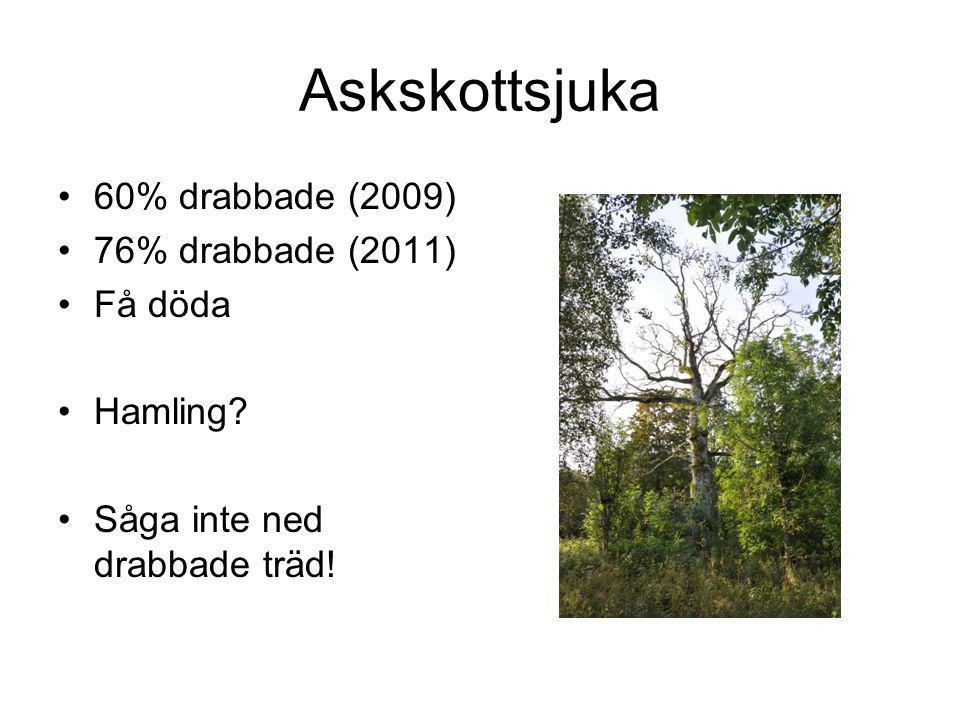Askskottsjuka 60% drabbade (2009) 76% drabbade (2011) Få döda Hamling? Såga inte ned drabbade träd!
