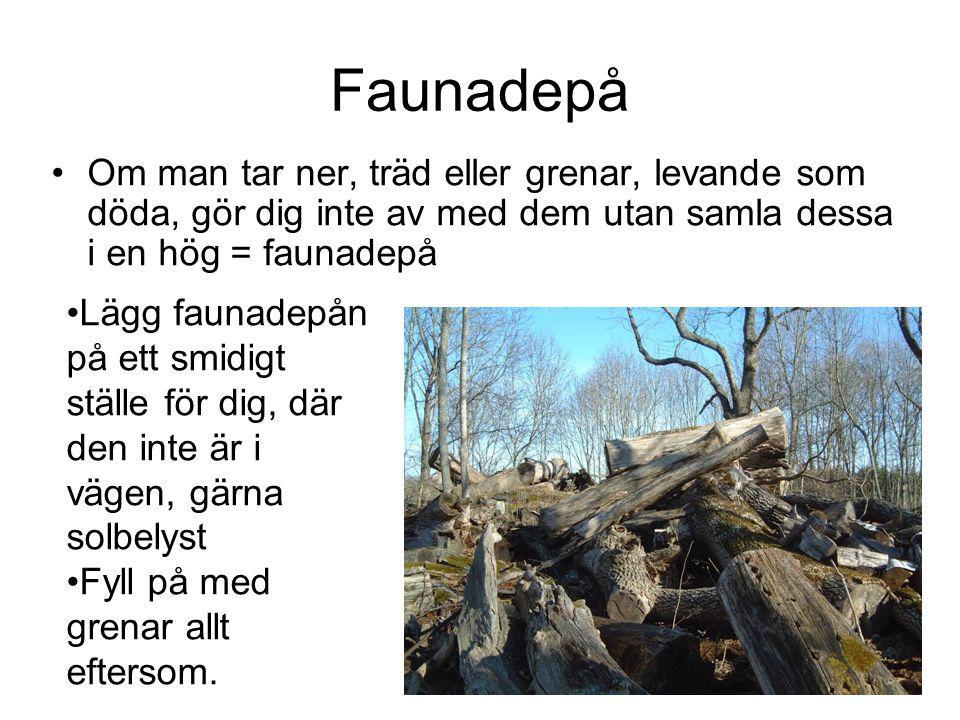Faunadepå Om man tar ner, träd eller grenar, levande som döda, gör dig inte av med dem utan samla dessa i en hög = faunadepå Lägg faunadepån på ett smidigt ställe för dig, där den inte är i vägen, gärna solbelyst Fyll på med grenar allt eftersom.