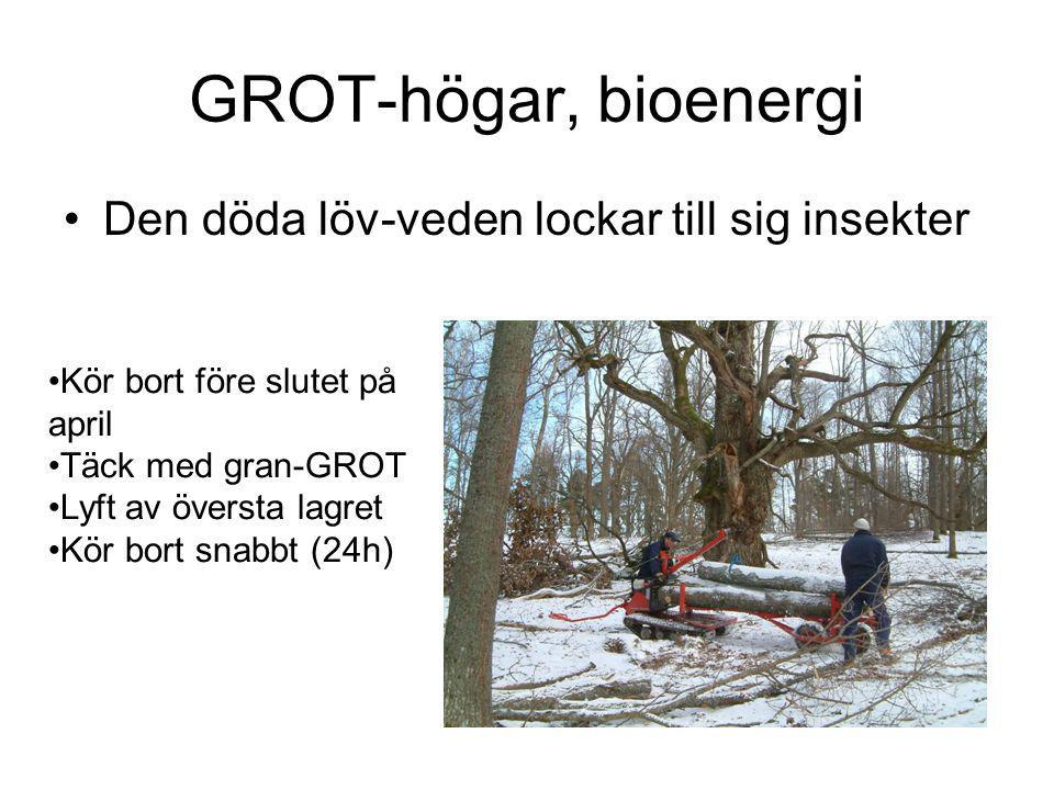 GROT-högar, bioenergi Den döda löv-veden lockar till sig insekter Kör bort före slutet på april Täck med gran-GROT Lyft av översta lagret Kör bort snabbt (24h)