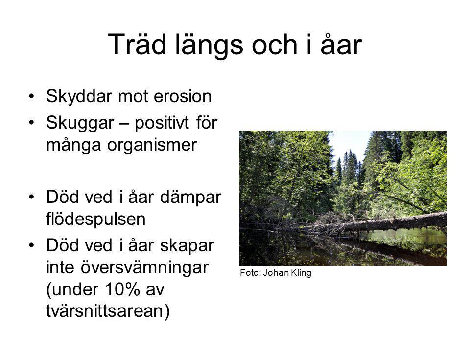 Träd längs och i åar Skyddar mot erosion Skuggar – positivt för många organismer Död ved i åar dämpar flödespulsen Död ved i åar skapar inte översvämningar (under 10% av tvärsnittsarean) Foto: Johan Kling