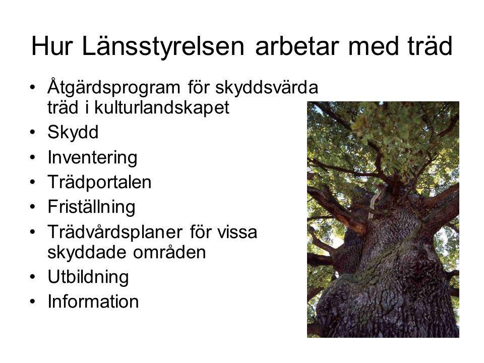 Hur Länsstyrelsen arbetar med träd Åtgärdsprogram för skyddsvärda träd i kulturlandskapet Skydd Inventering Trädportalen Friställning Trädvårdsplaner för vissa skyddade områden Utbildning Information
