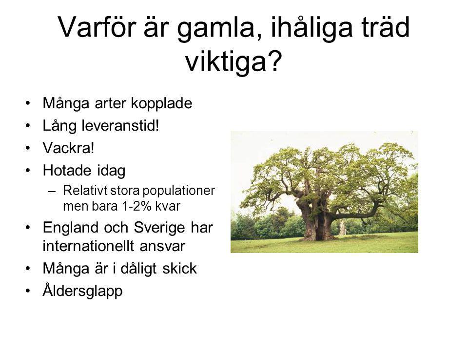 Varför är gamla, ihåliga träd viktiga.Många arter kopplade Lång leveranstid.