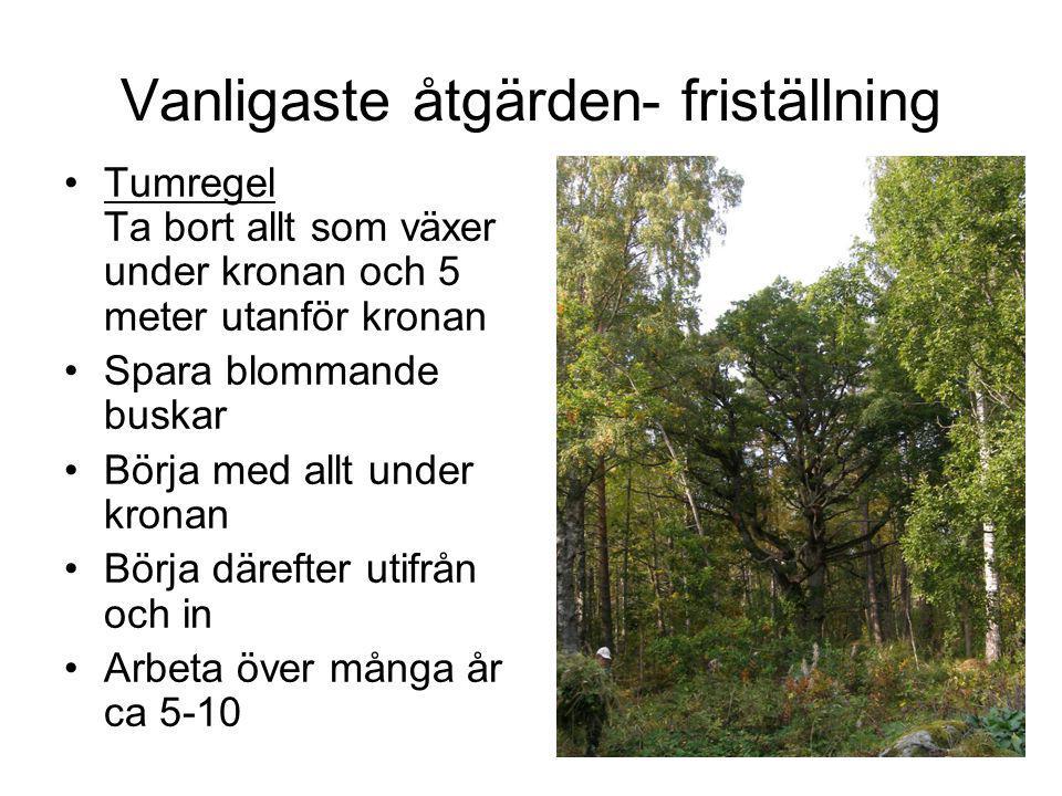 Tätortsmiljöer Säkerhet kan vara ett problem Flytta stig, eller stängsla in trädet Flytta parkeringsplats Grävning Använd död ved som stängsel Planera med hänsyn till gamla träd Hamling Information