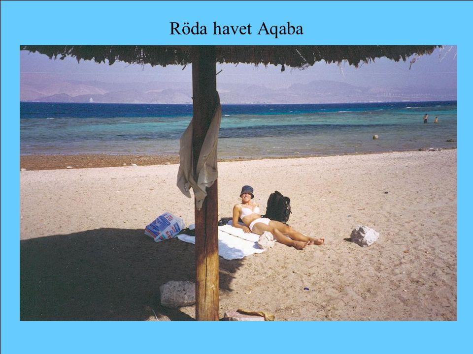 Röda havet Aqaba