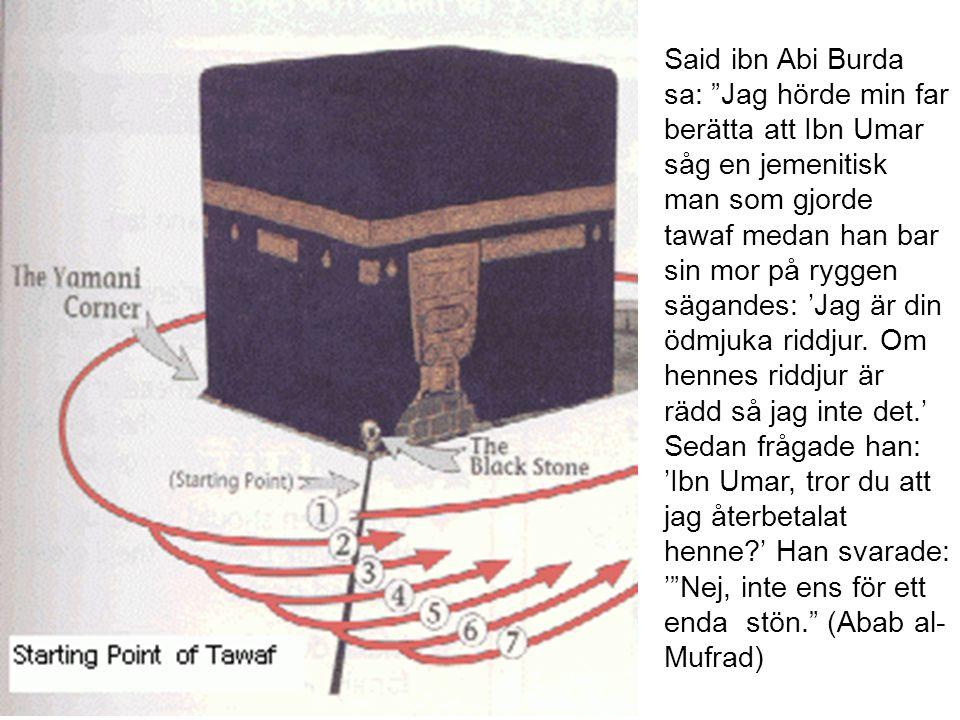 Said ibn Abi Burda sa: Jag hörde min far berätta att Ibn Umar såg en jemenitisk man som gjorde tawaf medan han bar sin mor på ryggen sägandes: 'Jag är din ödmjuka riddjur.