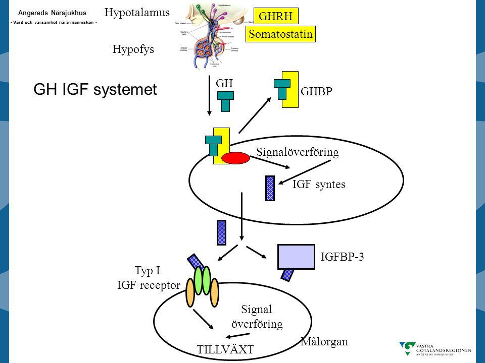 Angereds Närsjukhus - Vård och varsamhet nära människan - Hypotalamus Hypofys GHRH Somatostatin GH GHBP Signalöverföring IGF syntes IGFBP-3 Signal överföring TILLVÄXT Typ I IGF receptor Målorgan GH IGF systemet